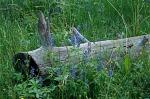 Blue Flowers &Log