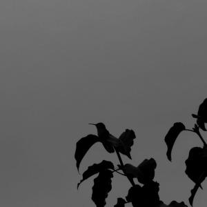 The elusive bird
