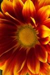 Fall Flowers 2jpg