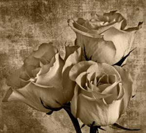 Birthday Roses