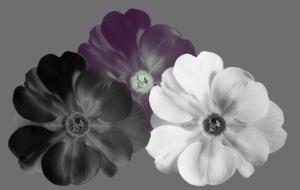 3flowers