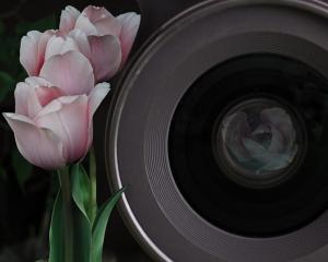Relationship Camera Flower-10