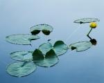 Butterfly Lake-4