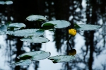 Butterfly Lake-5