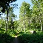 Hike to Stewart Falls-1