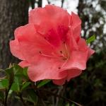 Mercer Botanical Gardens-2