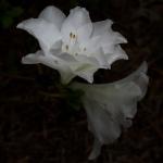 Mercer Botanical Gardens-3