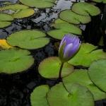 Mercer Botanical Gardens-4
