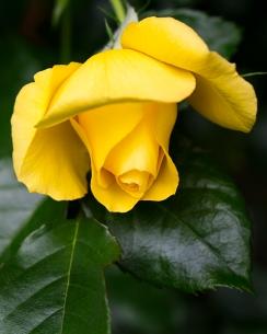 California Garden-3