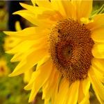 Flowersonthefarm-1