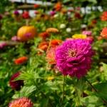 Flowersonthefarm-2